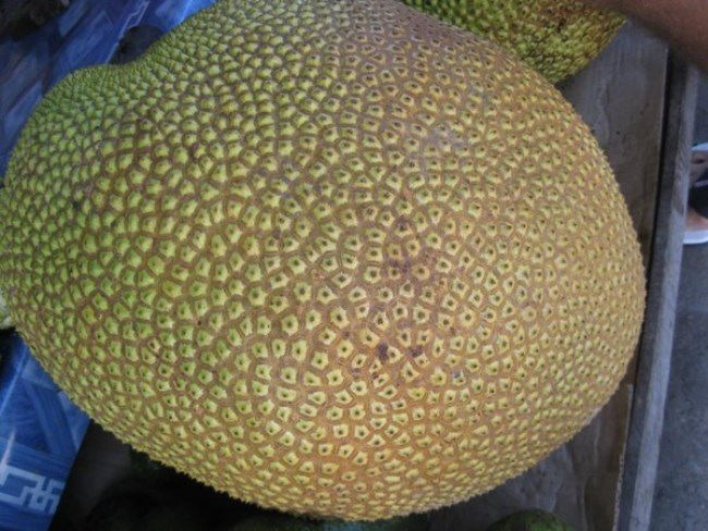 Charming jackfruit