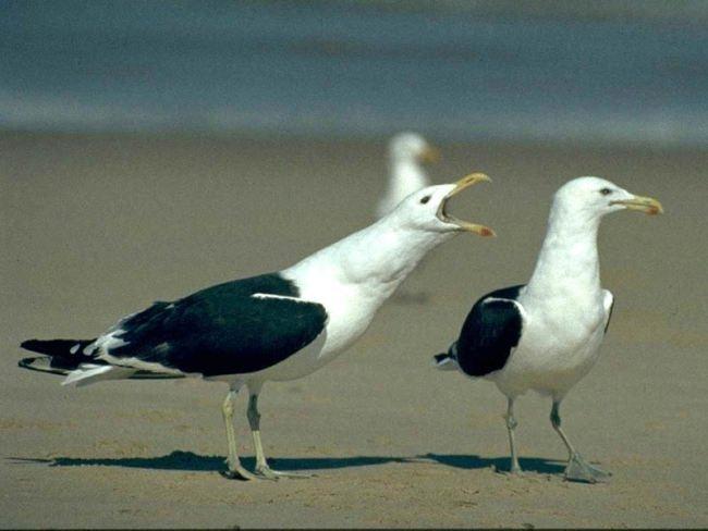 Cute gulls