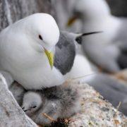 Gorgeous gull