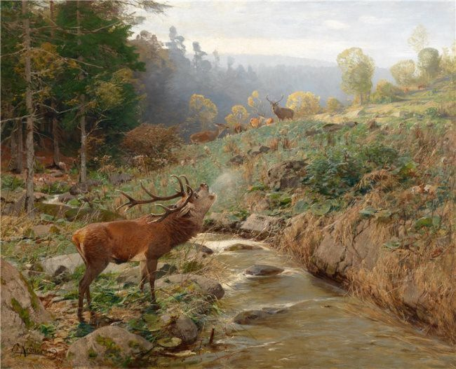 Rohrender Hirsch