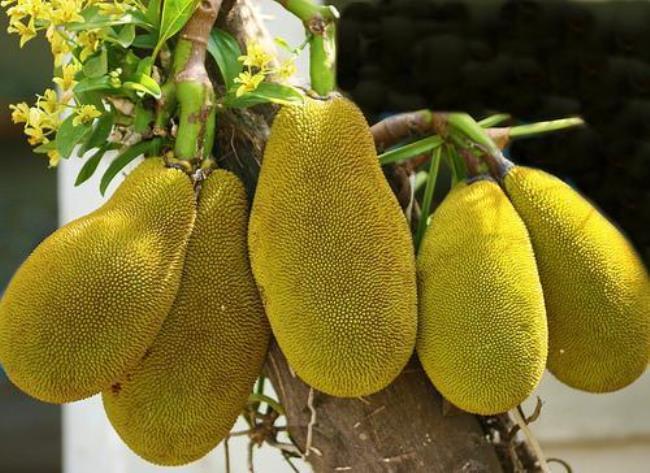 Stunning jackfruit