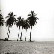 The Atlantic coast. Coconut palms on the beach. Gerhard Vetter, 1960