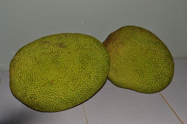 Wonderful jackfruit