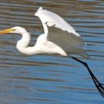 Heron – amazing bird