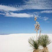 Unique White Sands desert