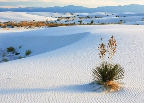 Unique White Sands desert