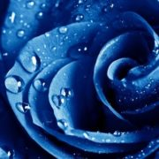 Main symbol of blue color is divinity