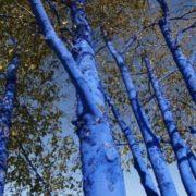 Blue tree installations