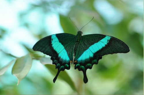 Emerald Green Butterfly