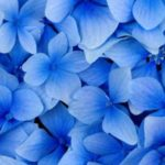 Blue color inspiration