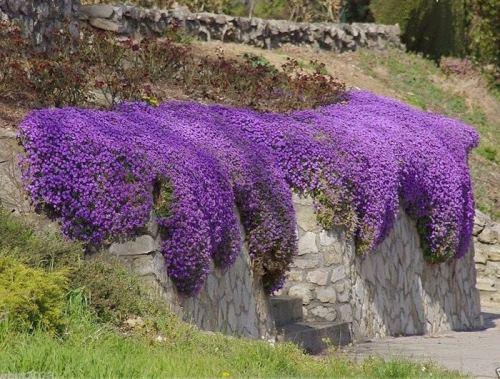 Violet color meaning