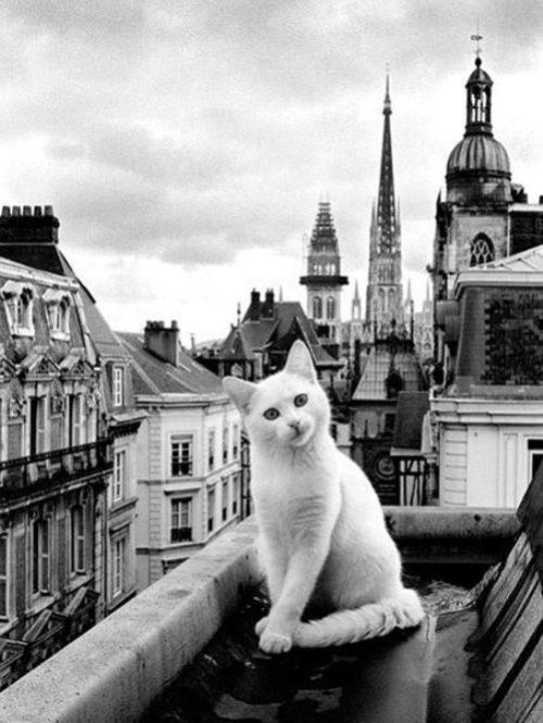 Cat on the roof. White color meaning