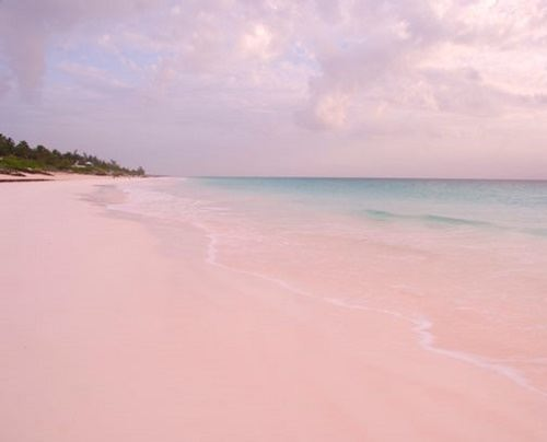 Harbour Island Pink Sands Beach
