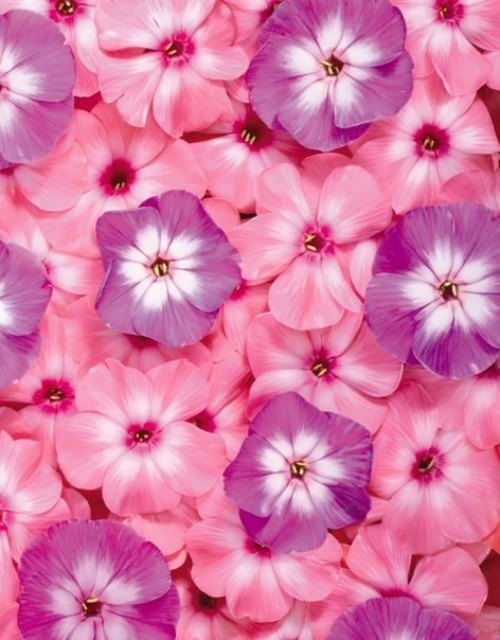 Pink color inspiration – flowers