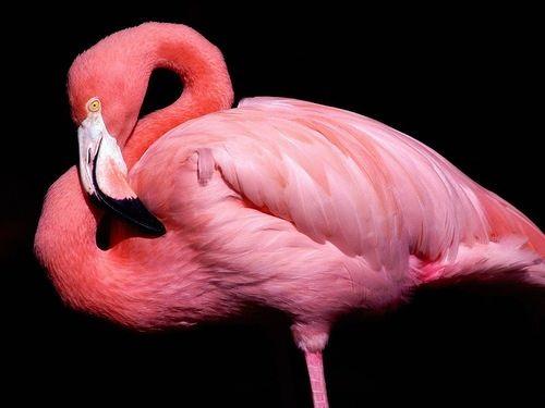 Pink color inspiration