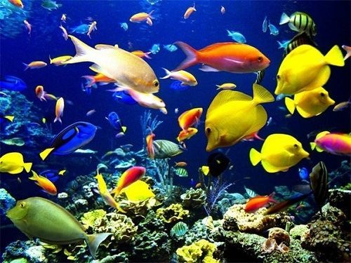 Stunning photo of Fish kingdom colorful world