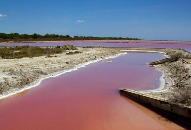 French Camargue blood red lake natural phenomenon