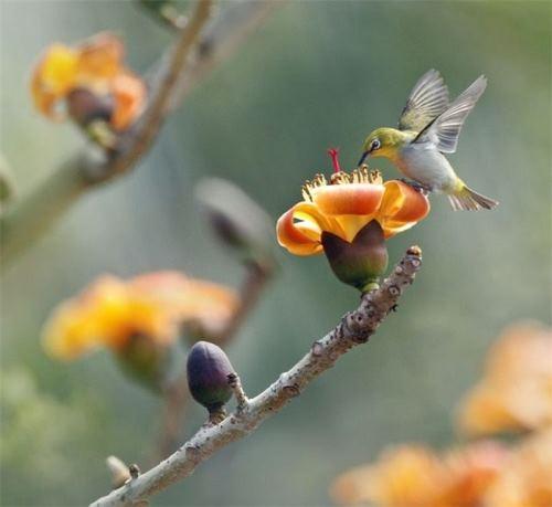 Wonderful Red Silk Cotton Tree