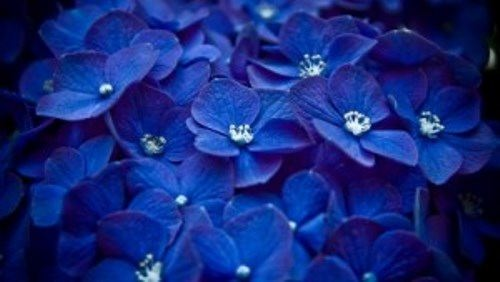 Blue flowers inspiration