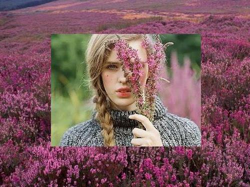 Charming pink heather