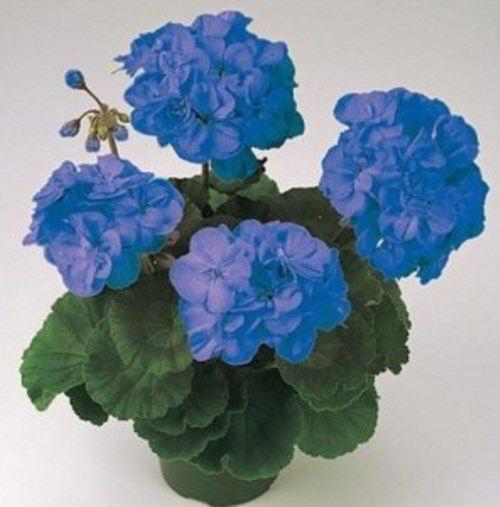 Blue flowers inspiration