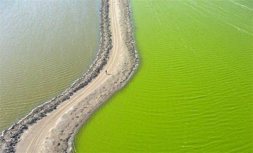 San Francisco Bay Multicolored ponds