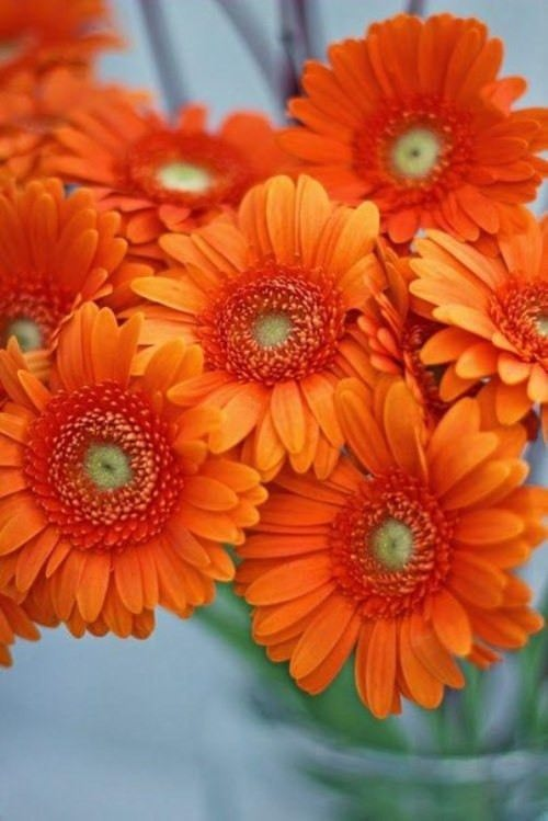 Orange color inspiration