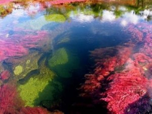 River of five colors