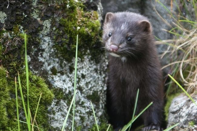 Awesome mink