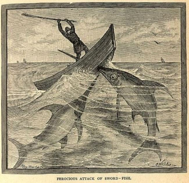 Swordfish – live torpedo
