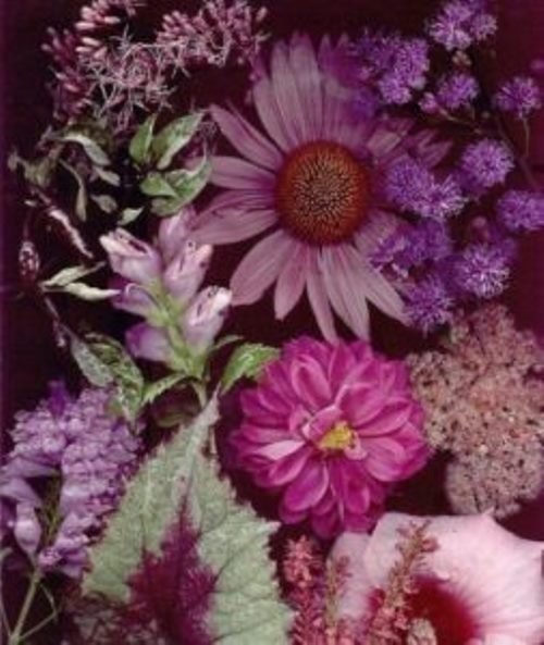 Color association. Purple violet and lilac flowers