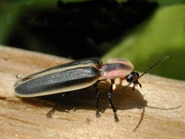 Incredible insect
