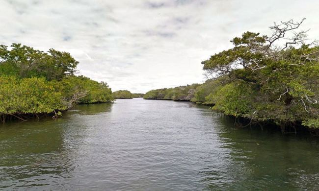 Mangrove forests on Isabella Island