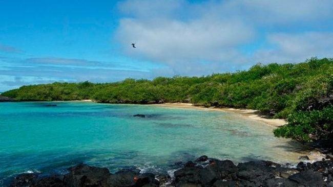 Tintoreras Island